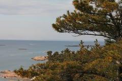 Albero di pino con la vista della baia georgiana Fotografia Stock Libera da Diritti