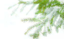 Albero di pino con neve Immagine Stock
