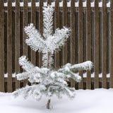 Albero di pino coperto di neve Fotografia Stock