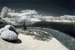Albero di pino dal lago nel Infrared Fotografia Stock