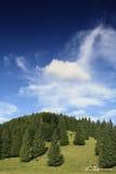albero di pino della foresta Immagine Stock