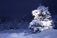 Albero di pino di inverno Fotografia Stock Libera da Diritti