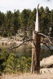 Albero di pino direzione lampo nel lago Fotografie Stock Libere da Diritti