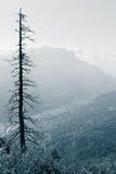 Albero di pino guasto sul paesaggio della montagna Immagine Stock