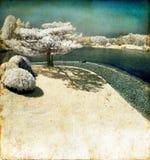 Albero di pino infrarosso dal lago Grunge Fotografie Stock Libere da Diritti