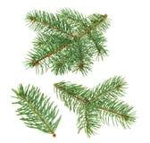 Albero di pino isolato su bianco senza ombra immagini stock