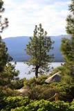 Albero di pino solo con Lake Tahoe nella priorità bassa immagini stock libere da diritti