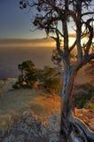 Albero di pino solo del grande canyon Fotografie Stock