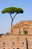 Albero di pino sopra Roma antica Immagine Stock Libera da Diritti