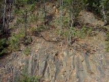 Albero di pino sulla scogliera immagini stock
