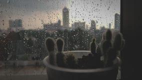 Albero di pioggia Fotografia Stock