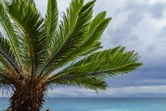 Albero di Plam davanti all'oceano blu Fotografia Stock