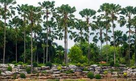Albero di Plam in parco Fotografie Stock Libere da Diritti