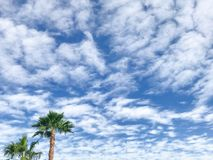 Albero di Plam su cielo blu con le nuvole su un sole Fotografia Stock Libera da Diritti
