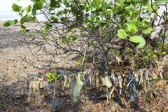 Albero di plastica delle mangrovie di inquinamento Immagine Stock Libera da Diritti