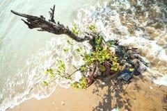 Albero di plastica delle mangrovie di inquinamento Fotografia Stock Libera da Diritti
