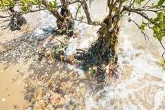 Albero di plastica delle mangrovie di inquinamento Immagini Stock Libere da Diritti