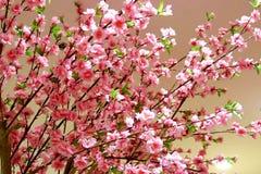 Albero di plastica di sakura del primo piano per il ramo di ontree del fondo fotografie stock libere da diritti