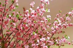 Albero di plastica di sakura del primo piano per il ramo di ontree del fondo fotografia stock