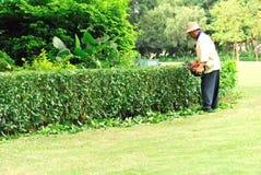 Albero di potatura del giardiniere Immagine Stock