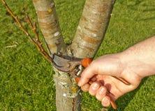 Albero di potatura dell'uomo in primavera Fotografia Stock