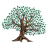 Albero di quercia illustrazione vettoriale