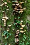Albero di quercia con la felce ed i funghi del Polypody comune Immagini Stock Libere da Diritti
