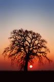 Albero di quercia di inverno Fotografia Stock Libera da Diritti