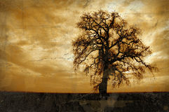 Albero di quercia di inverno di Grunge Fotografie Stock