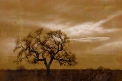 Albero di quercia di inverno di Grunge Immagini Stock Libere da Diritti