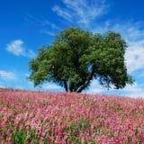 Albero di quercia e fiori dentellare Fotografie Stock Libere da Diritti