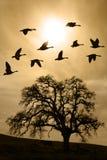 Albero di quercia nudo invecchiato in nebbia di inverno Fotografia Stock Libera da Diritti