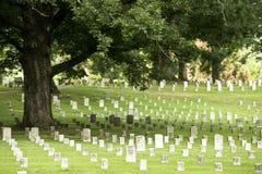 Albero di quercia in un cimitero militare Fotografia Stock Libera da Diritti