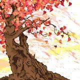 Albero di Sakura Fotografia Stock Libera da Diritti