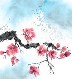 Albero di sakura del fiore Fotografie Stock