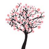 Albero di sakura della piena fioritura Fotografia Stock Libera da Diritti