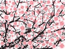 Albero di sakura della piena fioritura (fiore di ciliegia) BG Fotografia Stock Libera da Diritti
