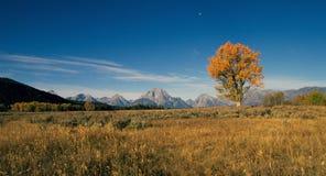 Albero di salice in autunno fotografia stock