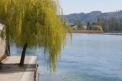 Albero di salice da un fiume a Stein am Rhein, Svizzera Fotografie Stock Libere da Diritti
