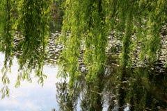 Albero di salice dal lago Fotografie Stock Libere da Diritti