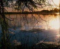 Albero di salice dall'acqua Fotografia Stock