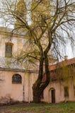 Albero di salice enorme con i rami fantastici che crescono sul cortile della chiesa cattolica abbandonata dell'ascensione sulla v fotografia stock libera da diritti