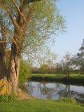 Albero di salice piangente da un fiume Immagini Stock Libere da Diritti