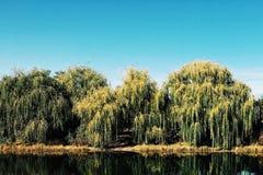 Albero di salice piangente lungo il lago nei giardini botanici di Chicago Fotografie Stock Libere da Diritti