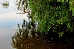 Albero di salice sopra il fiume Immagini Stock