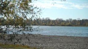 Albero di salice vicino al fiume nel giorno soleggiato di autunno video d archivio