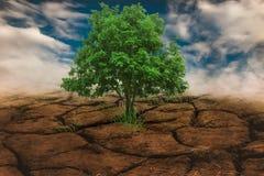 albero di siccità Immagini Stock