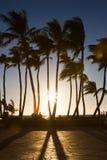 albero di silhoette della palma Fotografie Stock Libere da Diritti