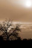 Albero di Siluette e un cielo rosso nuvoloso Fotografia Stock Libera da Diritti