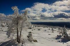Albero di Snowy nelle montagne Fotografia Stock
